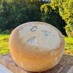 fromage d'estive en cours d'affinage.